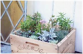 Tips for having a desirable garden